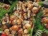 etna-mushrooms